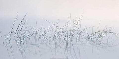 Reeds in the Mist  50x100cm Art Print Wallart Picture - Custom Framing, Art Prints, Framed Pictures, Ready Made Frames Artists Materials & more - Art Prints - art@home