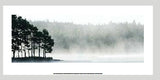 Capes Of Pines in Morning Mist  50x100cm Art Print Wallart Picture - Custom Framing, Art Prints, Framed Pictures, Ready Made Frames Artists Materials & more - Art Prints - art@home
