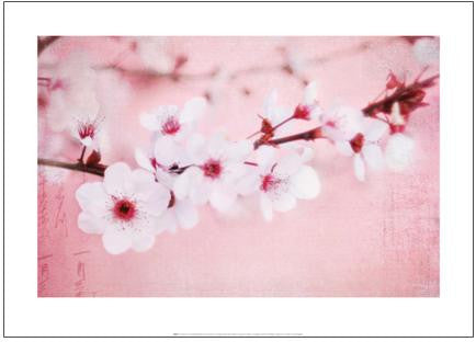 Plum Blossoms on Pink - Art Print