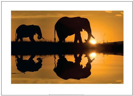 Elephants at Sunrise, Maasai Mara  - Art Print