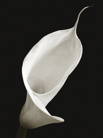 Calla I 60x80cm Art Print Wallart Picture - Custom Framing, Art Prints, Framed Pictures, Ready Made Frames Artists Materials & more - Art Prints - Ben Davies