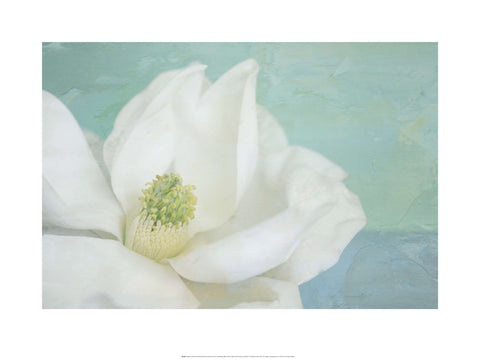Magnolia on Blue - Custom Framing, Art Prints, Framed Pictures, Ready Made Frames Artists Materials & more - Art Prints - art@home