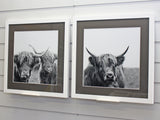 Pack of Framed Highland Cows