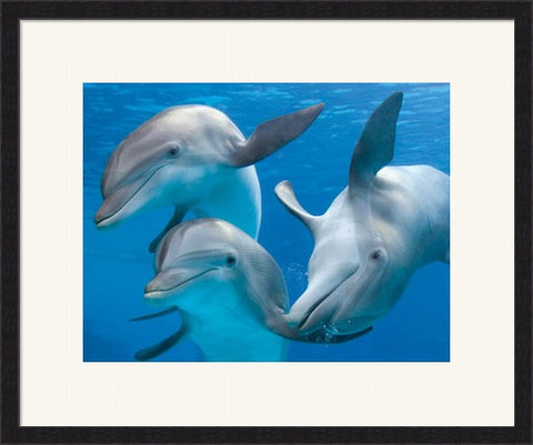 Framed - Animal Art Collection