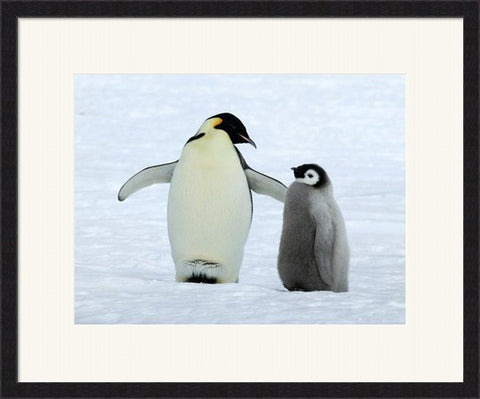 Penquin Advice -  Framed Art Print Poster Picture