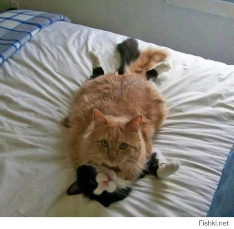 #cats #sex #top #on #bed #sheet