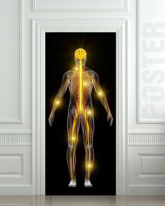 "Door STICKER skeleton medical spectre ghost phantom apparition spook mural decole film self-adhesive poster 30""x79""(77x200 cm) - Pulaton stickers and posters  - 1"