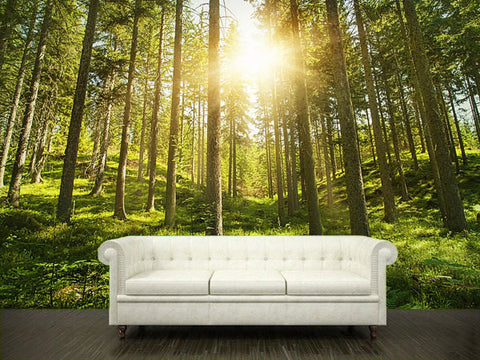 Wall Sticker MURAL leaves trees spring forest sun rays light decole poster - Pulaton stickers and posters  - 1