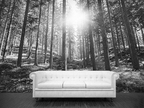 Wall Sticker MURAL Black & White leaves trees spring forest sun rays light decole poster - Pulaton stickers and posters