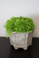 ANTIQUE GREY CHINESE VESSEL WITH MOSS SPECIMEN