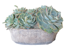 ANTIQUED LIMESTONE VESSEL WITH SUCCULENT SPECIMEN