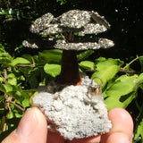 Pyrite Money Tree~CRGTPYRI