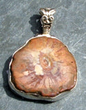 Petrified Wood Pendant