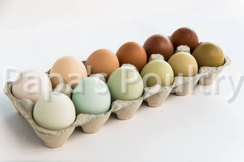 Variety Hatching Egg- All breeds- Available now