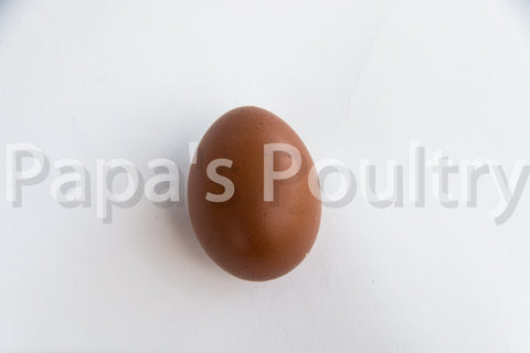 Auto-sexing- Marans Golden Cuckoo Hatching Egg (available now)