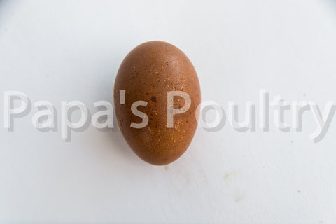 Marans- French Blue/Black/Splash Copper Hatching Egg