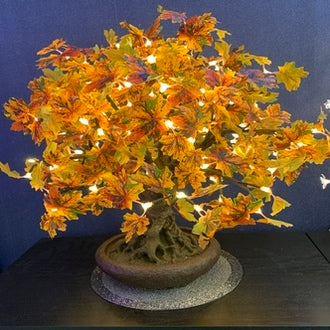 Enchanted Tree – 0.6m Autumn Maple Bonsai Tree
