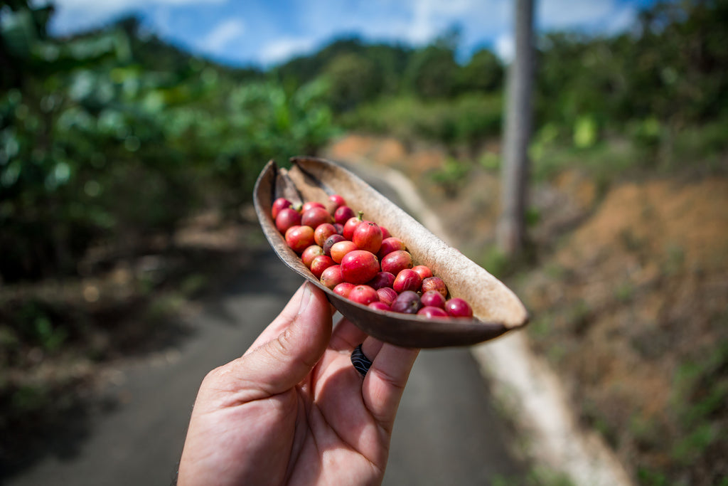 REcolecta: Coffee Pickers Contest