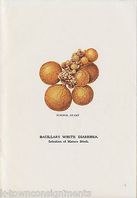 STORRS AGRICULTURAL EXPERIMENT BACILLARY WHITE DIARRHEA ANTIQUE FARM REPORT 1912 - K-townConsignments