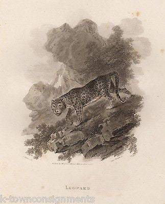 JUNGLE LEOPARD EARLY ETHOLOGY NATURISTS ANTIQUE ENGRAVING PRINT LONDON - K-townConsignments