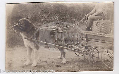 St Bernard Dog in Harness Pulling an Old Wooden Wagon Antique Snapshot Photo - K-townConsignments
