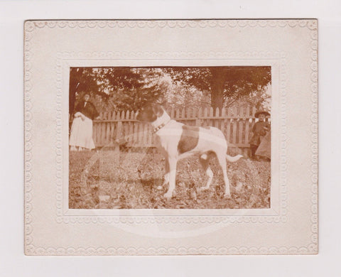 AMERICAN BULL DOG PUPPY IDed MASTER NED UTZ OUT IN YARD ANTIQUE PHOTO ON BOARD - K-townConsignments