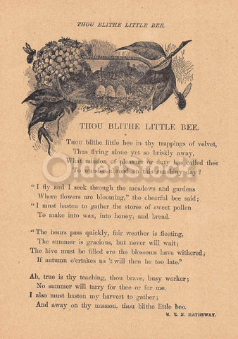 Blithe Little Bee Cute Nature Poem Antique Graphic Illustration Print 1902