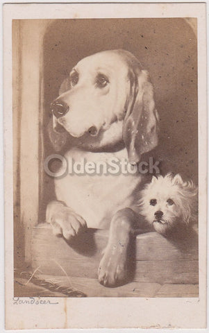 Old Landseer Hound Dog & Terrier Puppy Paris France Antique Artistic CDV Photogr