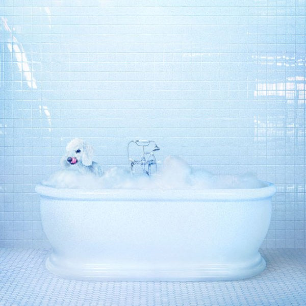 Vessel (CD) | Frankie Cosmos