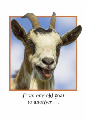 Sugarhouse Greetings Cards From One Old Goat... Card