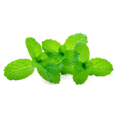 Mint Leaves  GCC  Bunch 200g |Hojas de menta   GCC Manojo 200g