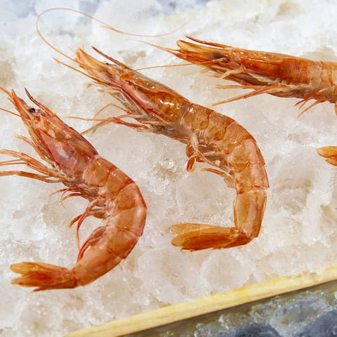 Wild Rose Shrimp 70-90 Pc/Kg (Spain)|Gamba de Huelva 70-90 Uds/kg (España)