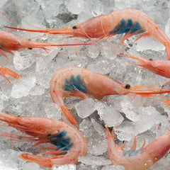 Wild Blue Belly Shrimp (100/150 Pc/ kg Spain)|Quisquilla (100/150 Uds per kg - España)