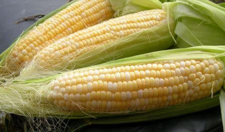 Golden Bantam Sweet Corn
