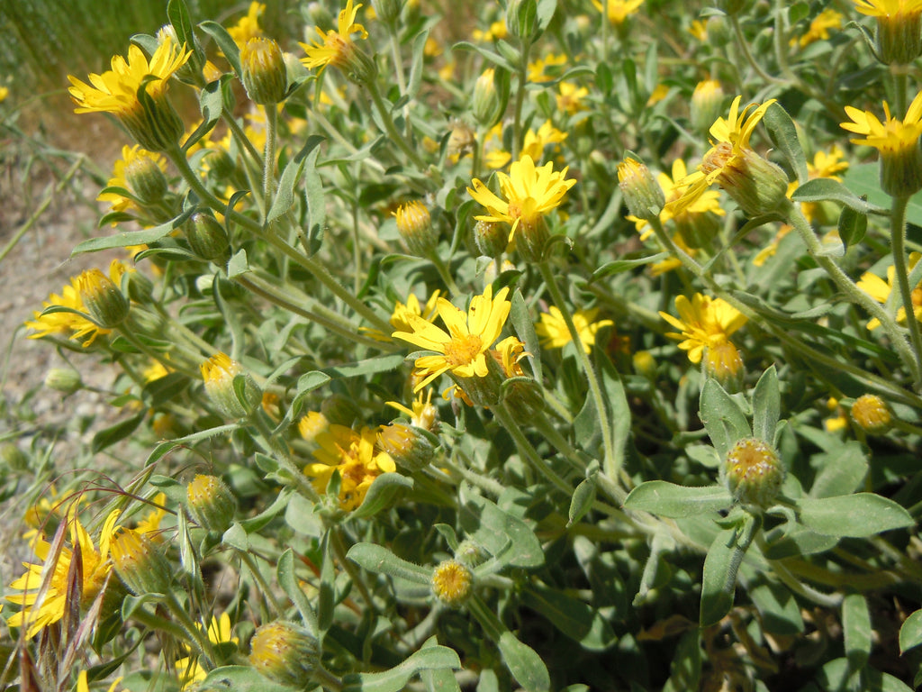 Wildflowers Plants Of The Southwest