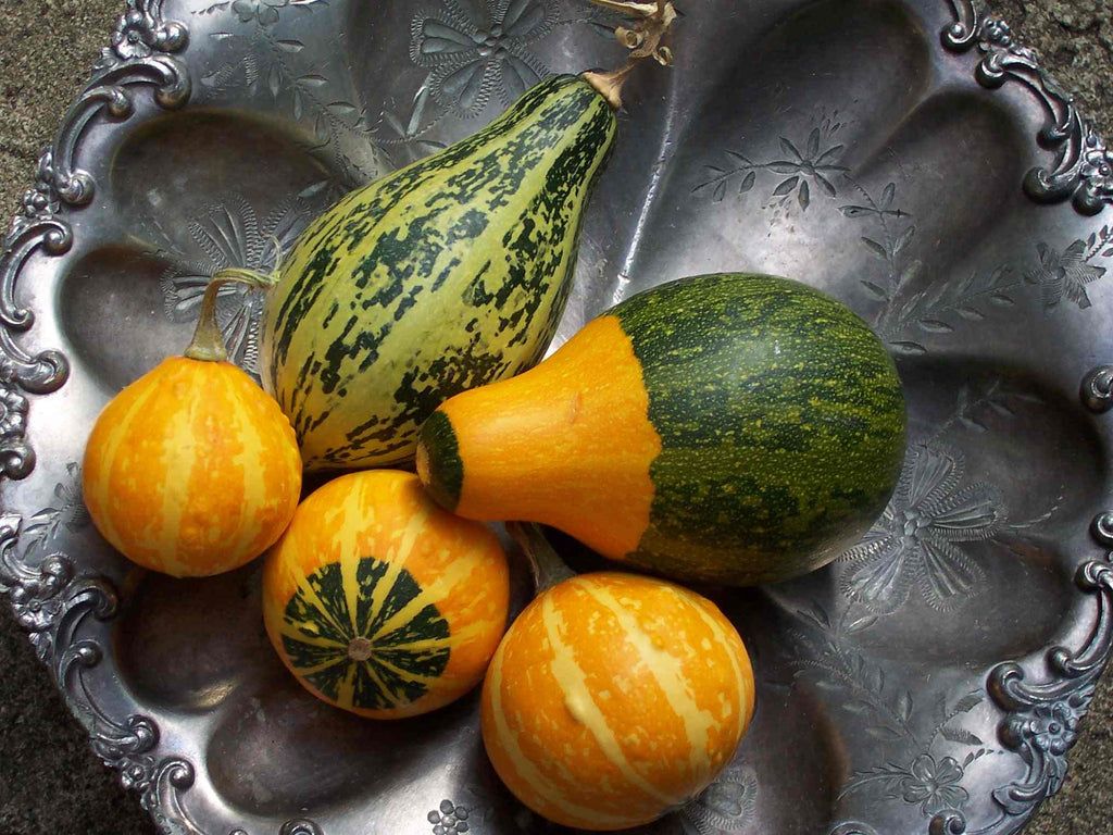 Large Ornamental Mixed Gourds