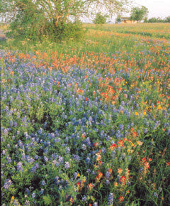 Texas Prairie Mix