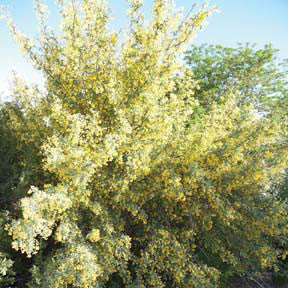 Trees Shrubs Plants Of The Southwest