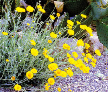 Wildflowers \u2013 Plants Of The Southwest