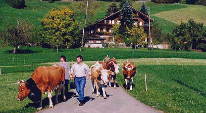 swiss switzerland alps mennonite tour cow bells