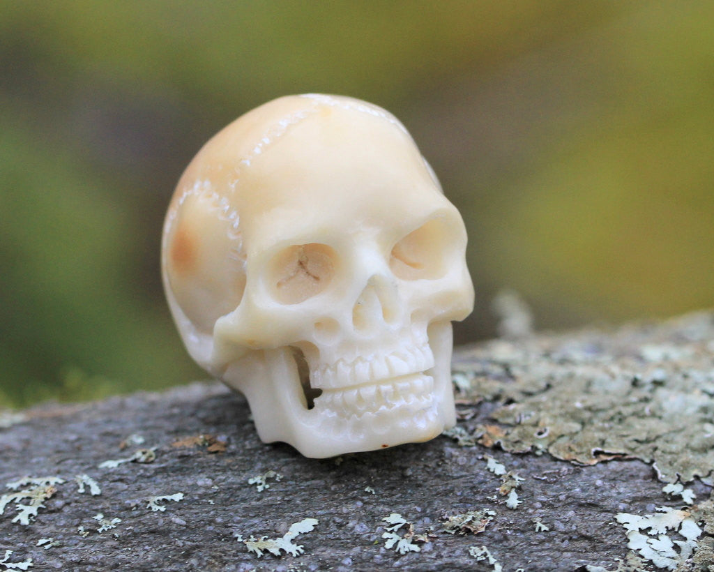 Skull, Carved Tagua Nut, Vegetable Ivory, Organic Carving, Skulls, Death, Jewelry, Ornament, Embellishment, Charm, Natural Pendant B107