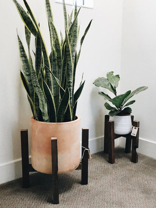 Modern Rustic Plant Stand