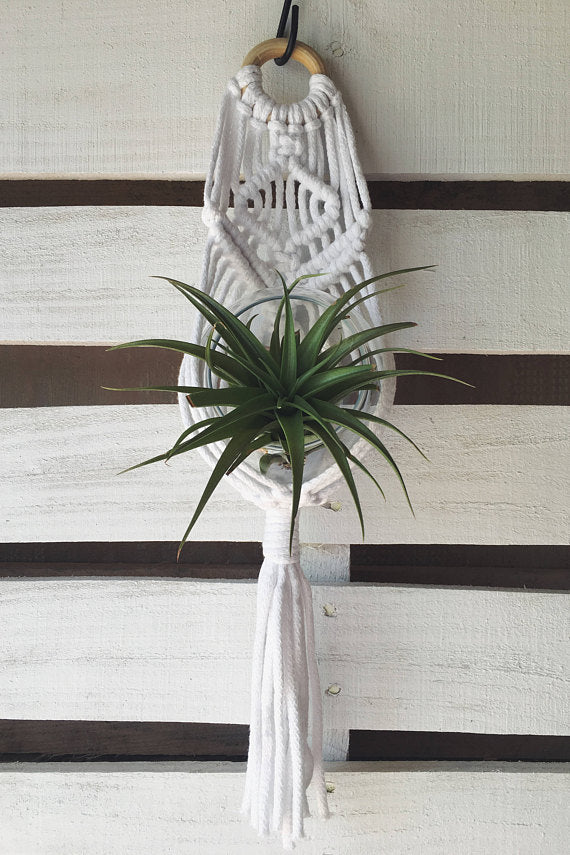 Macrame Small Wall Plant Hanger