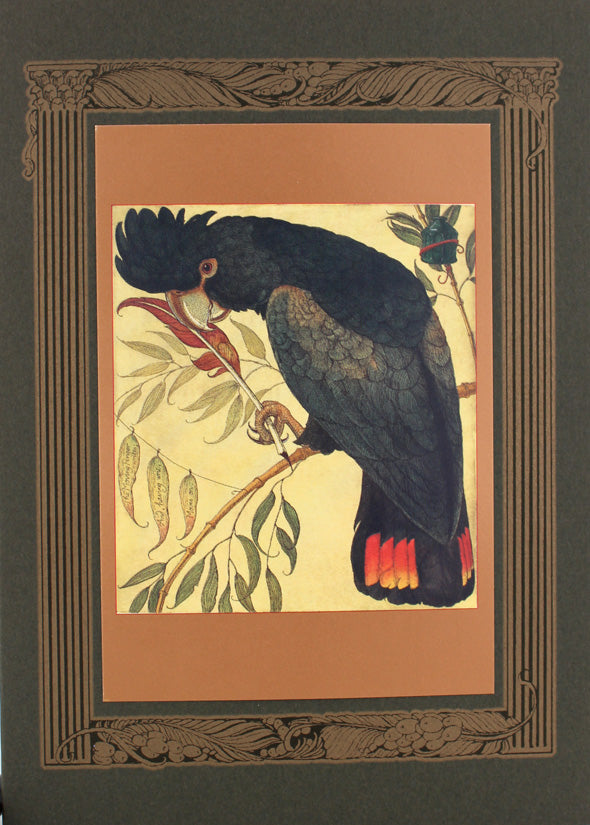 Black Cockatoo Scribe Card -- DragonSpace