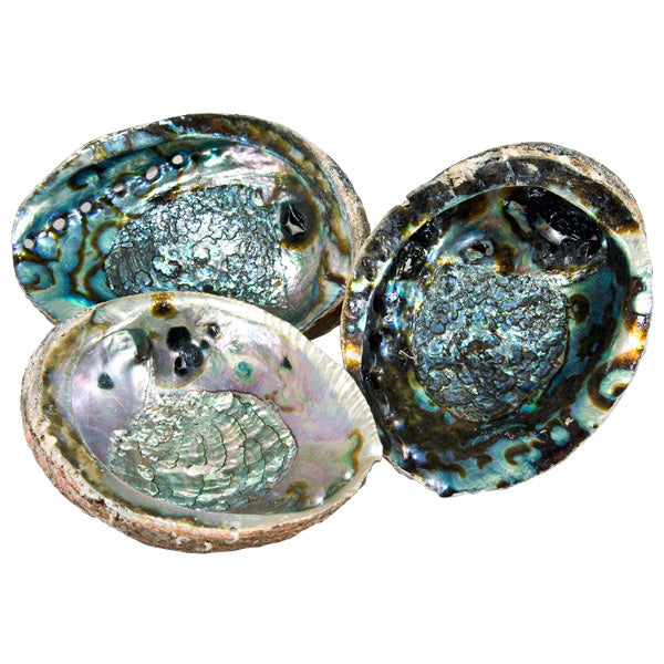 Abalone Shell -- DragonSpace