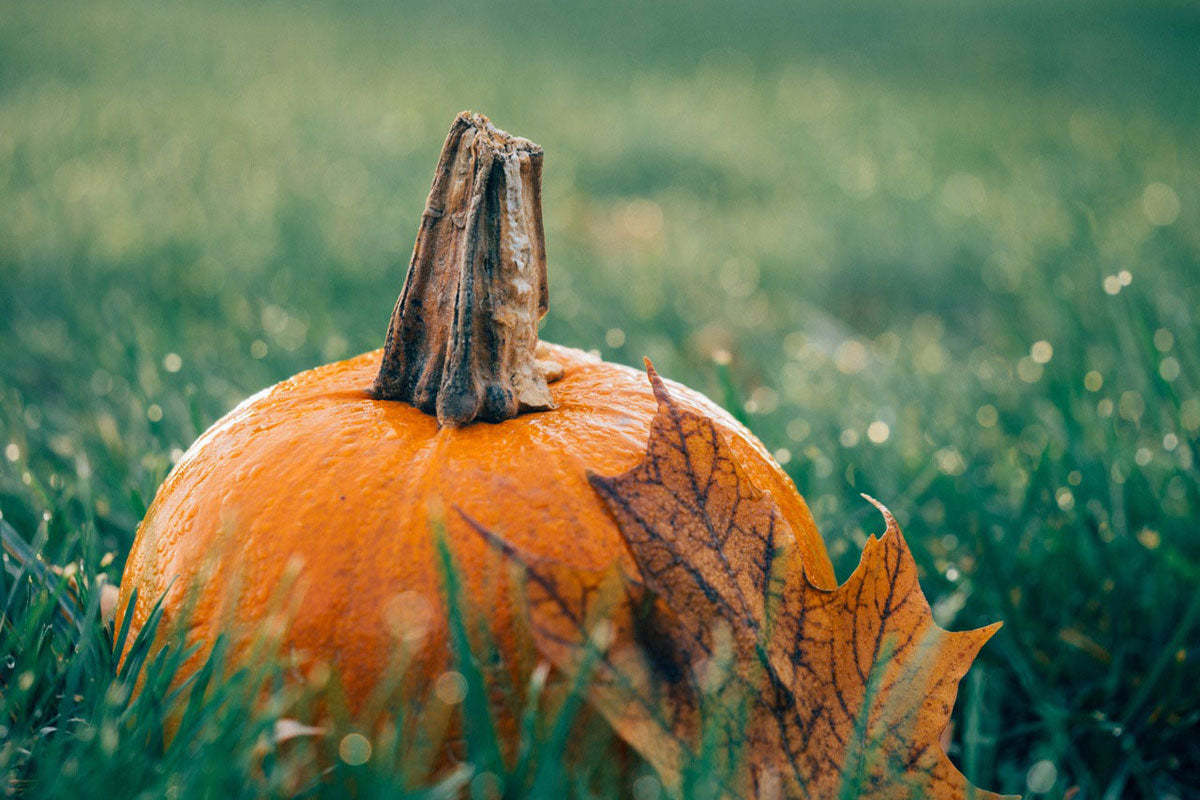 Pumpkin photo