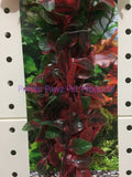 ~AQUA ONE / PLANT / ECOSCAPE / LARGE / HYGRO / RED~