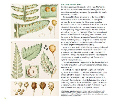 Sample page - The language of ferns