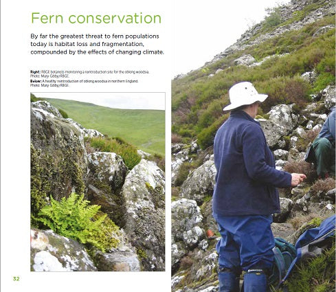 Sample page - Fern conservation