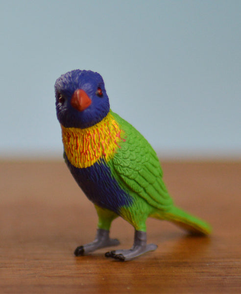 Science and Nature Lorikeet